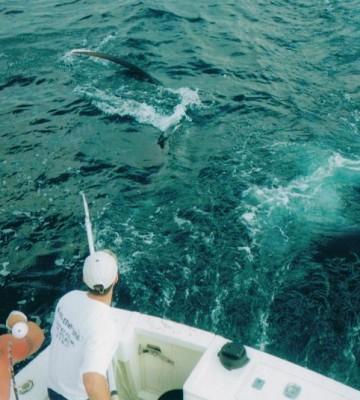 Shark | Kott the Limit | Charter Fishing Ocean City NJ